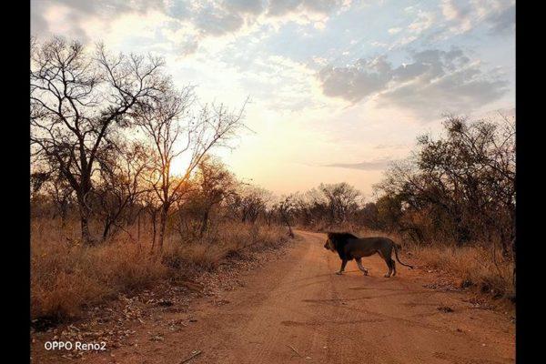 secret-lives-of-animals-natural-shot-p07s8sb4